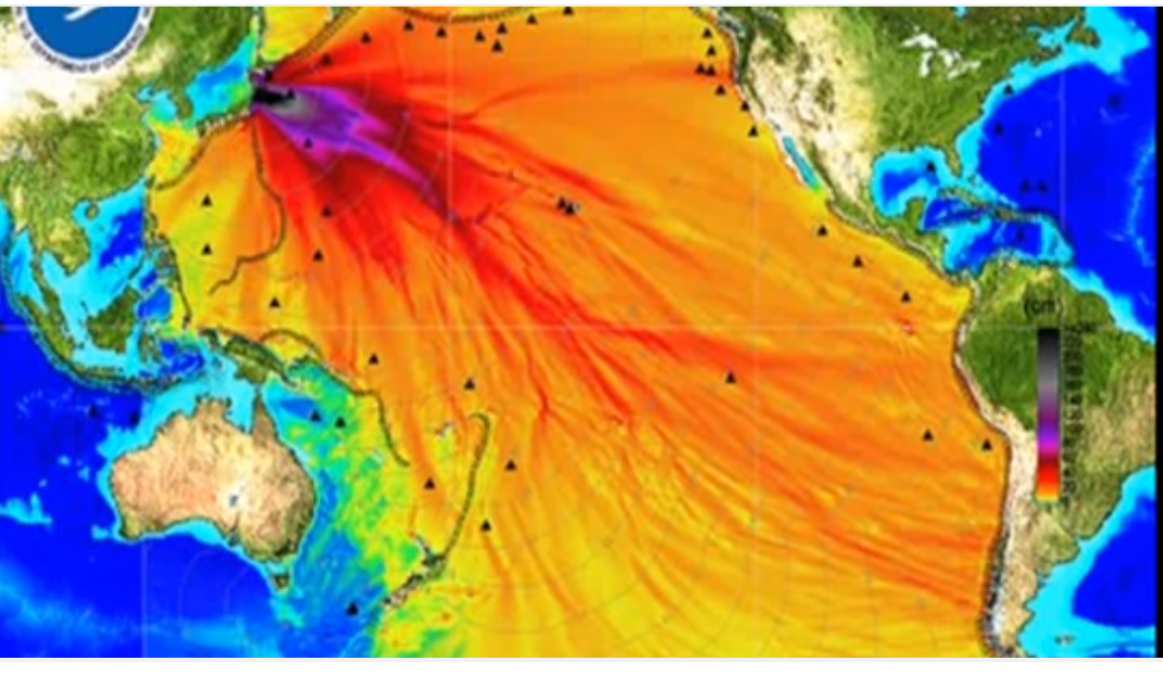 Fukushima nuke rad food arjun limbu for Pacific ocean radiation fish